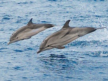 nageaveclesdauphins
